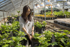Student tending to plants in one of our greenhouses